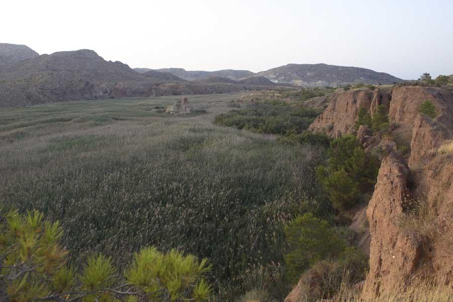 Carrizal de la cola del Pantano (S. Arroyo)