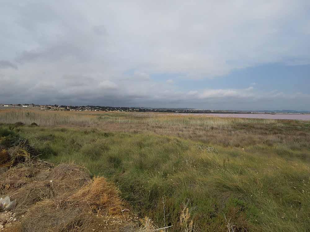 Orilla sureste de la laguna de Torrevieja (S. Arroyo)