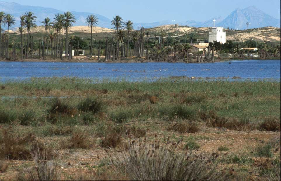 Fondet de la Senieta uno de los sectores del Clot de Galvany afectado por las recalificaciones (M.A. Pavón)