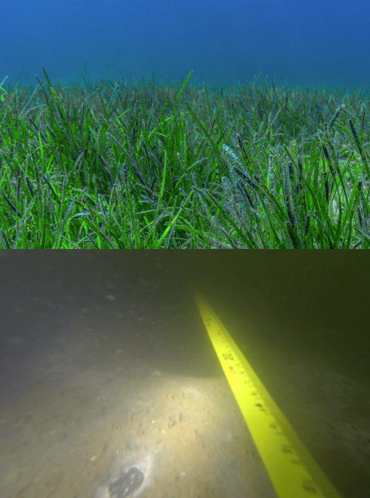 Fotografías comparativas del estado anterior y actual de los fondos del Mar Menor (ANSE)